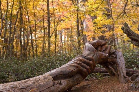 El Bosque Tallado